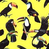 Teste padrão do tucano do pássaro do céu em uns animais selvagens pelo estilo da aquarela ilustração stock