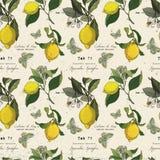 Teste padrão do vetor com ramos e borboleta do limão Fotos de Stock