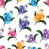 Teste padrão do vetor de pansies coloridos Fotografia de Stock Royalty Free