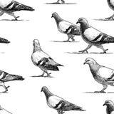Teste padrão do vetor de pombos urbanos de passeio Imagens de Stock