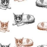 Teste padrão do vetor dos esboços dos gatinhos fotografia de stock
