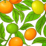 Teste padrão do vetor do mandarino Ilustração Stock