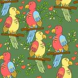 Teste padrão dos papagaios dos periquitos Os pássaros modelam com corações em um fundo verde Imagem de Stock Royalty Free
