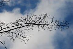 Teste padrão dos ramos de árvore na nuvem e no fundo azul do céu do inverno Fotografia de Stock