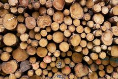 Teste padrão dos troncos de árvore cutted e grampeados vistos da parte dianteira imagem de stock royalty free