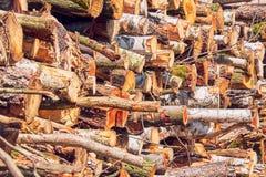 Teste padrão dos troncos de árvore cutted e grampeados vistos do lado foto de stock royalty free