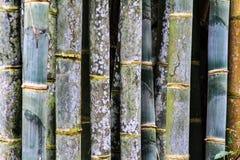 Teste padrão dos troncos de bambu do verde da paralela fotos de stock royalty free