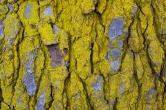 Teste padrão e textura de madeira da casca de árvore Fotografia de Stock