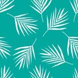 Teste padrão em folha de palmeira Fotos de Stock