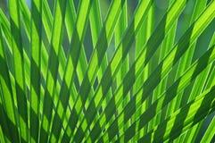Teste padrão em folha de palmeira fotografia de stock