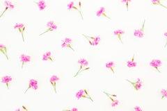 Teste padrão feito de flores cor-de-rosa no fundo branco Configuração lisa, vista superior Flores do verão Fotografia de Stock Royalty Free