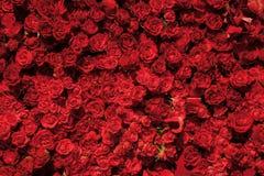 Teste padrão festivo de rosas vermelhas fotografia de stock