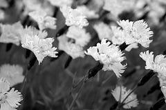 Teste padrão floral. fotos de stock royalty free