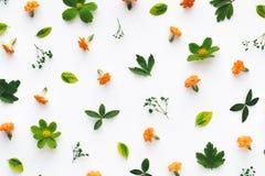 Teste padrão floral colorido Fotografia de Stock Royalty Free