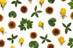 Teste padrão floral colorido Fotografia de Stock