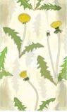 Teste padrão floral com dentes-de-leão Foto de Stock Royalty Free