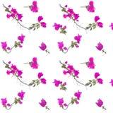 Teste padrão floral cor-de-rosa sem emenda Foto de Stock Royalty Free