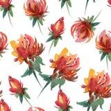 Teste padrão floral da aquarela sem emenda Imagens de Stock Royalty Free