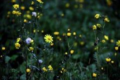 Teste padrão floral da mola bonito verde e amarela imagens de stock royalty free