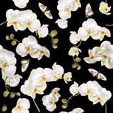 Teste padrão floral da orquídea Imagens de Stock