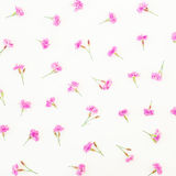 Teste padrão floral de flores cor-de-rosa no fundo branco Configuração lisa, vista superior Fotos de Stock Royalty Free