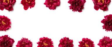 Teste padrão floral de flores vermelhas da peônia em um fundo branco imagens de stock royalty free