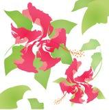 Teste padrão floral do hibiscus Foto de Stock