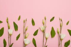 Teste padrão floral do lisianthus branco com copyspace imagem de stock royalty free