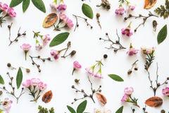 Teste padrão floral do quadro completo Foto de Stock
