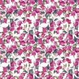 Teste padrão floral do vetor da aquarela Imagem de Stock