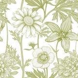 Teste padrão floral do vetor sem emenda Imagem de Stock Royalty Free