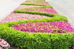 Teste padrão floral em um parque Fotografia de Stock