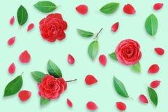 Teste padrão floral feito de camélias vermelhas e das folhas verdes, branche Imagens de Stock