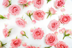 Teste padrão floral feito de rosas cor-de-rosa, folhas verdes, ramos no fundo branco Configuração lisa, vista superior Teste padr imagens de stock