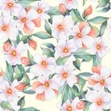 Teste padrão floral Flores brancas Imagem de Stock Royalty Free