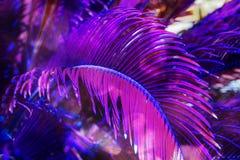 Teste padrão floral natural colorido na moda das folhas de palmeira imagem de stock royalty free