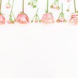 Teste padrão floral Quadro de rosas e dos botões cor-de-rosa bonitos no fundo branco Configuração lisa, vista superior Fotografia de Stock Royalty Free