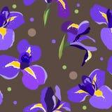 Teste padrão floral sem emenda com íris Imagem de Stock Royalty Free