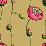 Teste padrão floral sem emenda com das rosas no fundo verde, aquarela Imagens de Stock Royalty Free