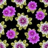 Teste padrão floral sem emenda com malvas Fotos de Stock Royalty Free