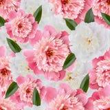 Teste padrão floral sem emenda com peônias cor-de-rosa Foto de Stock Royalty Free