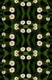 Teste padrão floral sem emenda da camomila. Fotos de Stock Royalty Free