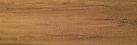 Teste padrão floral sem emenda do damasco Papel de parede real O papel de fundo do ouro, textura é vintage velho cor afligida do  fotos de stock
