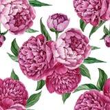 Teste padrão floral sem emenda excelente e delicado com as peônias de florescência isoladas no fundo branco, projeto pintado à mã ilustração royalty free