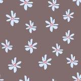 Teste padrão floral simples bonito com a flor da margarida no bege Imagem de Stock
