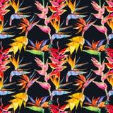 Teste padrão floral simples na moda Flores do calathea, strelitzia Cópia tropical da selva Repetindo o fundo para a matéria têxti Fotografia de Stock Royalty Free
