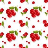 Teste padrão Folhas vermelhas do verde das bagas Ilustração do vetor Fotos de Stock
