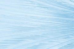 Teste padrão gelado Imagens de Stock