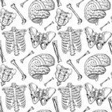 Teste padrão humano dos ossos Imagens de Stock Royalty Free
