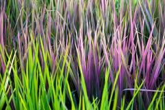 Teste padrão incomum do verde do rosa da folha do arroz Imagem de Stock Royalty Free